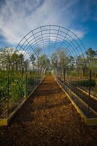 Diy Trellis  U0026 Raised Garden Box Combo