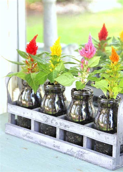decorating  potted plants unique planter ideas