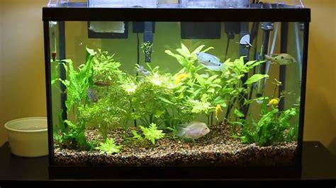 aquarium   running    gallon
