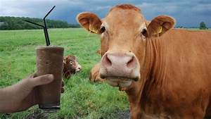 Millions Of Americans Think Chocolate Milk Comes From