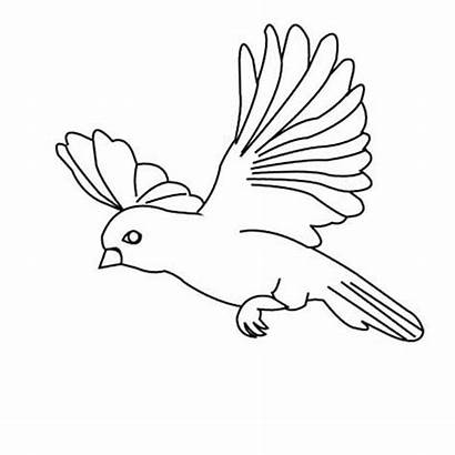 Flying Bird Coloring Drawing Pages Birds Amazing