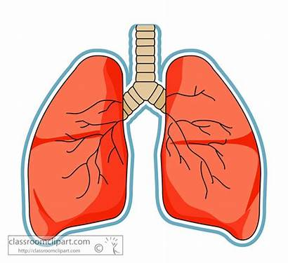 Lungs Lung Anatomy Clipart Human Anatomical Classroom