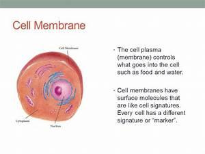 Cell Structures - SJL Teacher Professional Development