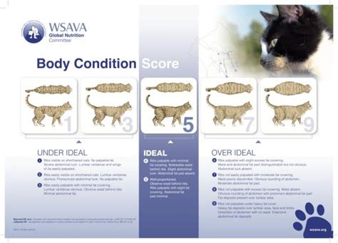 cat overweight chart   detect cat obesity