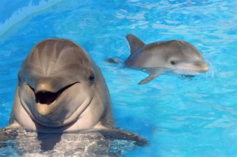 Name Sea Life Parks New Baby Dolphin Win A Free Trip To