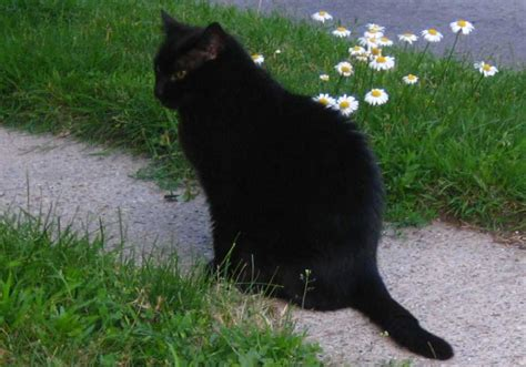 cat evil am thurston cats considered wrong did why susan wiccan 2008 hoomin adopt writer staff times kittens