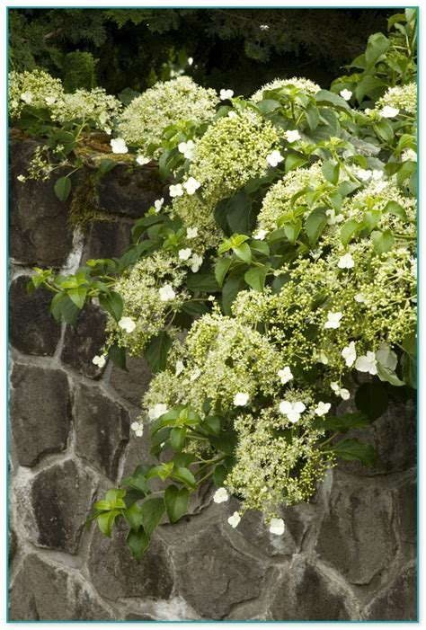 Best Climbing Plants With Flowers 2