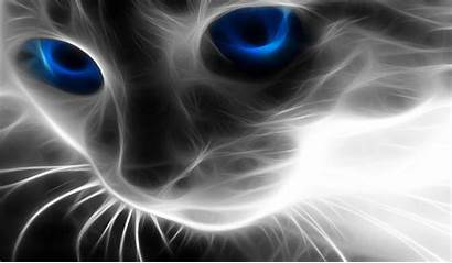 Cool Desktop Pantalla Effect Fondos Cat Computer