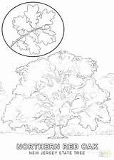 Oak Tree Coloring Trees Autumn Drawing Getcolorings Fall Printable Leaves Leaf Getdrawings sketch template