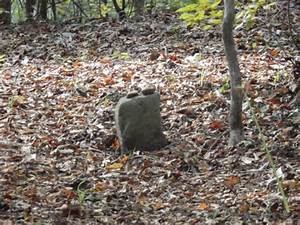 Lone marker in Slave Cemetery - Picture of Mount Locust ...