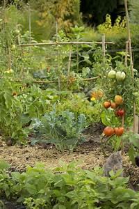 Plantes Amies Et Ennemies Au Potager : le paillage au potager un geste cologique potager ~ Melissatoandfro.com Idées de Décoration