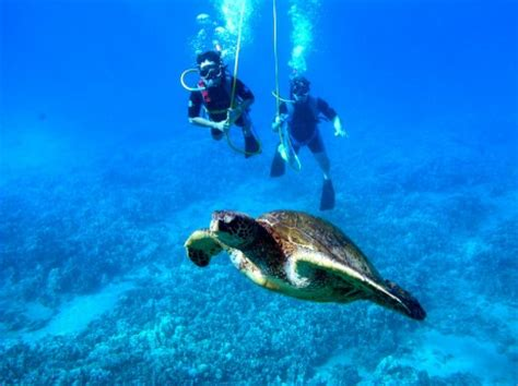 Honda Snorkeling by Your 7 Day Cruising Itinerary For A Trip On The