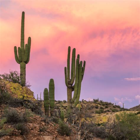 How to successfully care for Cacti | Cactus indoor care ...