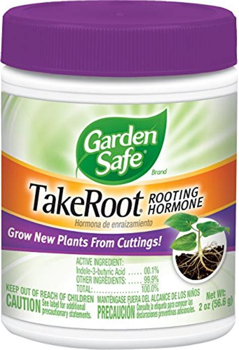 Hormon Root Up By Aprilia Garden the best method to propagate violets gardener s path