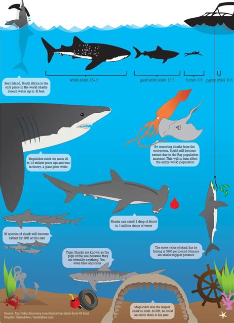 Great Barrier Reef Food Chain Diagram
