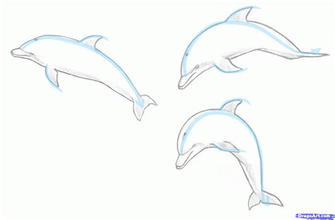 draw  jumping dolphin step  step sea animals