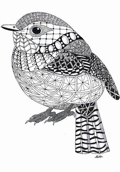 Zentangle Patterns Coloring Animals Bird Pages Easy