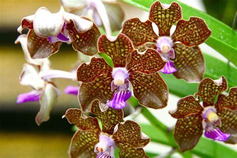 orchid flowering season orchid season 5 photograph 1347104 freeimages com