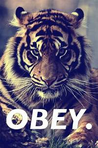 tiger swaggg | Tumblr