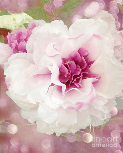 shabby chic pink roses dreamy cottage shabby chic pink and white soft ethereal fluffy rose floral art impressionistic