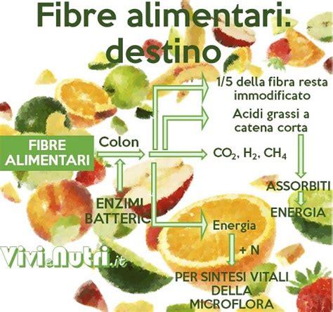 fibre alimentare la fibra alimentare vivienutri it