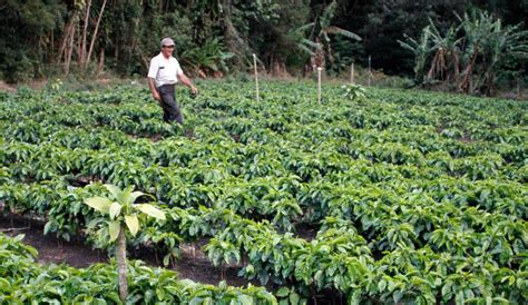 Coffee's Economics, Rewritten By Farmers Italian Coffee Machine Dublin Chemex Vs Gator Bialetti Maker Vancouver For Sale Best Instant Prices Wiki Ireland Moka Online