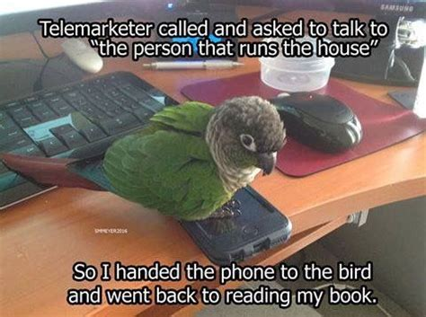 Crazy Bird Meme - 17 best images about birds of a feather on pinterest pets portrait and bird toys