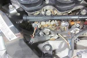 Rats Causing Car Problems In Post