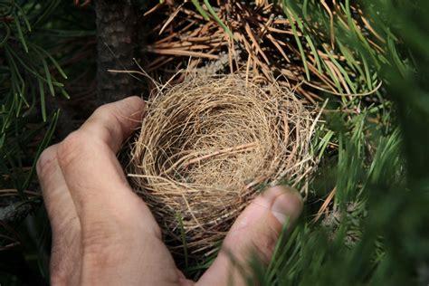 Nested Nests - Bird Canada