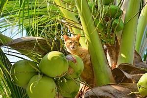 Welche Pflanzen Sind Nicht Giftig Für Katzen : kokospalmen giftig f r katzen oder gesund ~ Eleganceandgraceweddings.com Haus und Dekorationen