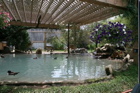 1000+ Ideas About Duck Pond On Pinterest