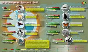 2010's Most Threatened Animal Species | Visual.ly