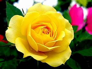 Top 5 flowers for Valentine's Day   DurhamRegion.com