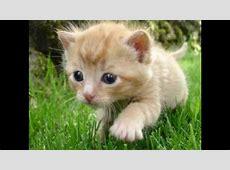 Süße Baby Tiere YouTube