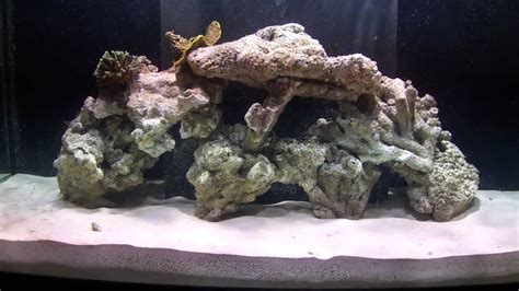 Aquascape Live Rock by How To Aquascape A Reef Aquarium