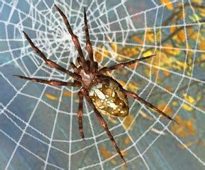 l araign 233 e et sa toile