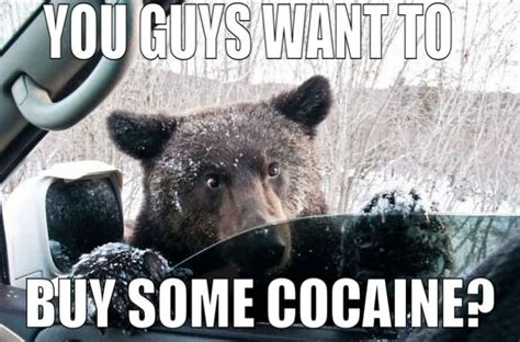 Bear Cocaine Meme - 35 very funny bear meme photos and images