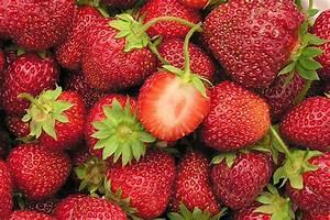 Plant De Fraise : veestar fraisier plant de fraises ~ Premium-room.com Idées de Décoration