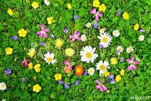 Wiese Mit Blumen : bunte blumen wiese stockfotos und lizenzfreie bilder auf ~ Watch28wear.com Haus und Dekorationen