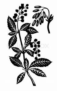 Vector Silhouette Of The Plant On White Background