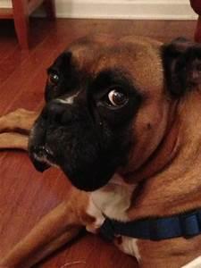 Charleston dog house 10 reviews pet sitting 2360 air for Charleston dog house