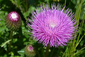 Blumen Im Juli : davoser blumen in bildern ~ Lizthompson.info Haus und Dekorationen