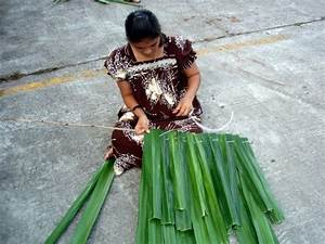 Ethnobotany Of Micronesia  A Course Companion