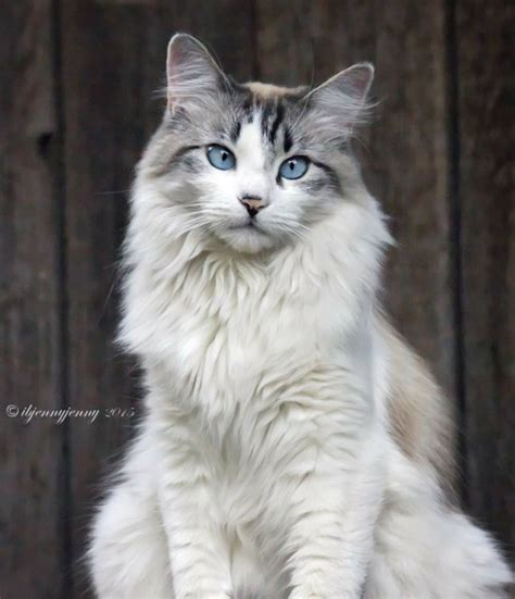 cats many attracted under toxoplasma influence highly attractive saw why boo