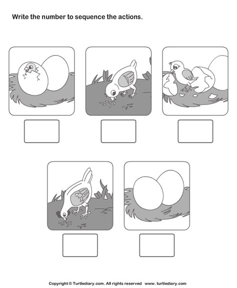 Picture Sequencing Birth Of A Chicken Worksheet  Turtle Diary
