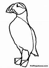 Puffin Coloring Outline Clip Popular Designlooter Library Clipart Coloringhome President sketch template