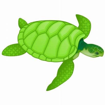 Turtle Sea Clipart Ocean Animals Svg Clip