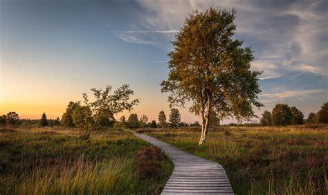 belgium, Sky, Evening, Grasslands, Trees, Wallonia, Nature ...