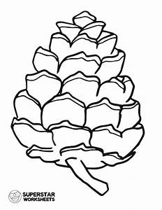 Parts Of A Pine Cone Worksheets