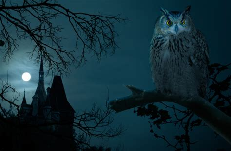 Creepy Owl Wallpapers by 10 Creepy Wallpaper Images For Your Desktop